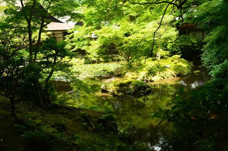 南禅院の池