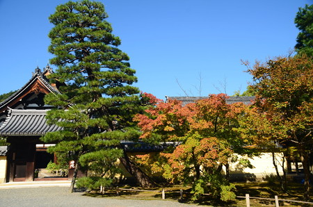 秋晴れの等持院