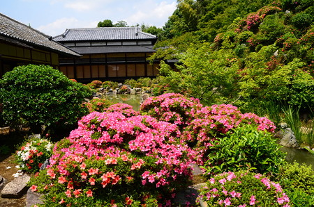 皐月咲く智積院庭園