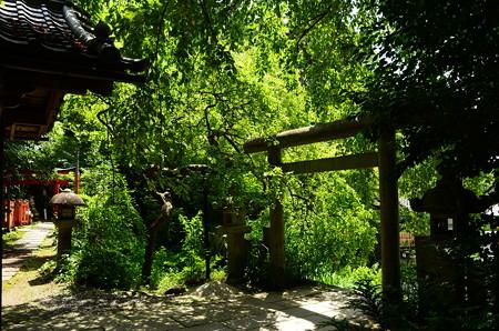 緑の大豊神社