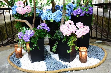 叡電八瀬駅の紫陽花飾り