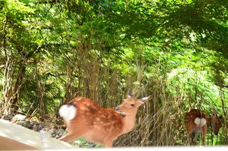 ケーブル脇の鹿