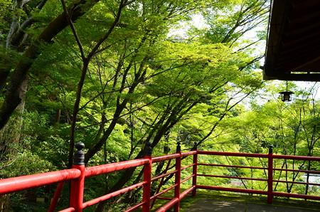 緑の今熊野観音寺