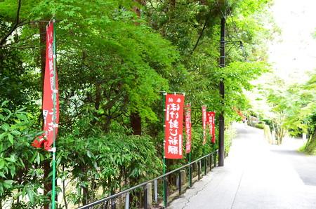 今熊野観音寺参道