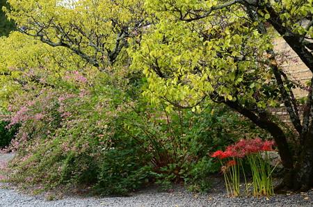 萩と彼岸花