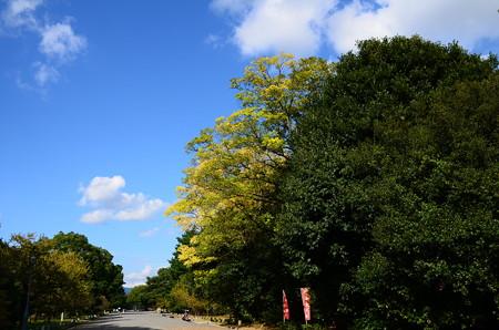 秋空の京都御苑