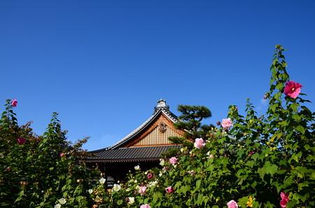 芙蓉の寺・妙蓮寺