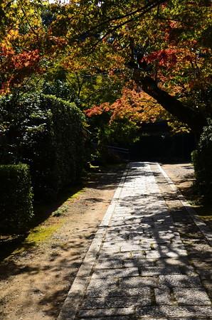 紅葉への道