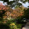 桜もみじの養源院