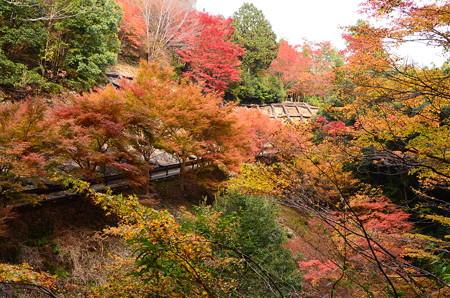 西明寺参道の色付き