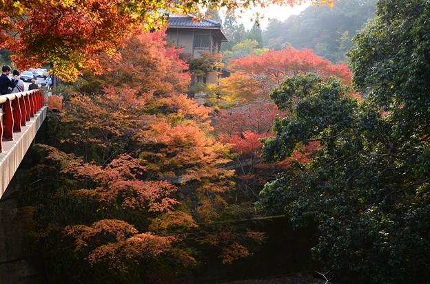 錦水亭付近の紅葉