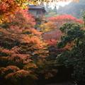 Photos: 錦水亭付近の紅葉