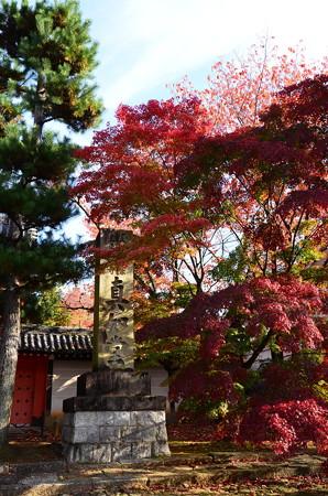 楼門前の色付き