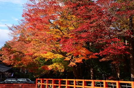 上賀茂神社の色付き