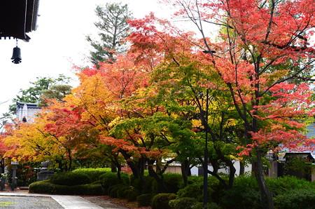 紅葉の妙顕寺
