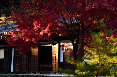 法堂前の紅葉