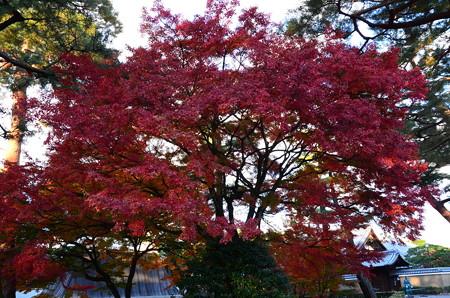 鐘楼前の紅葉