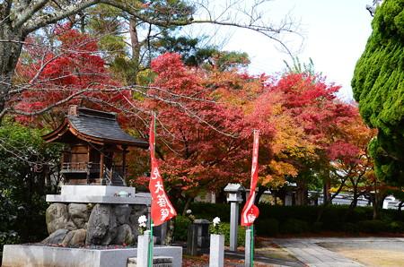 妙顕寺の色付き