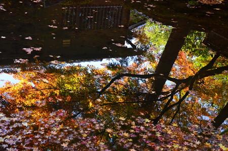 池に映る秋彩