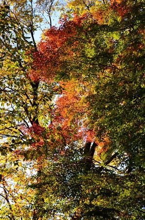 色付き始めた糺の森