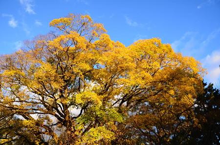 黄色の秋~