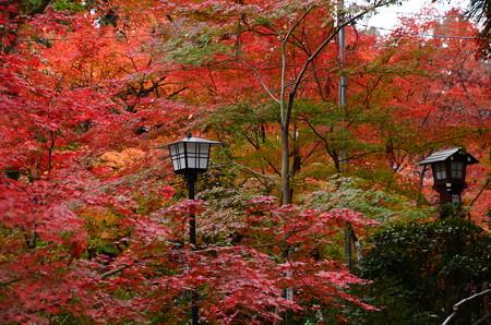 長岡天満宮の紅葉景色