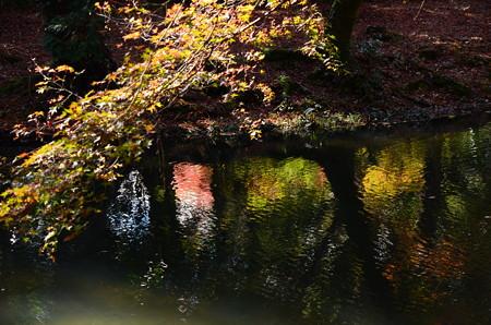 秋色を映す水面