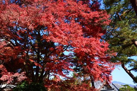 紅葉の下の比叡山