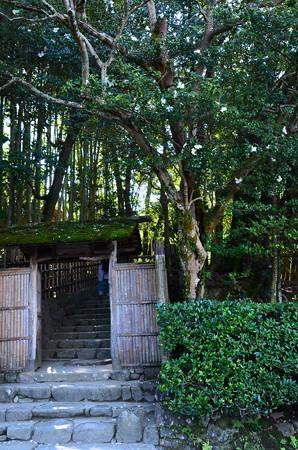門を飾る山茶花(サザンカ)