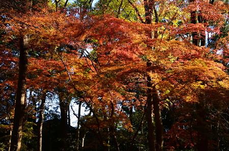 糺の森も色付き進む