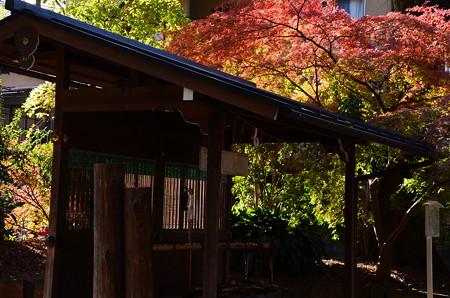 三本杉脇の紅葉