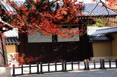 京都迎賓館を彩る紅葉