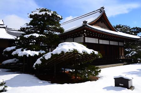 雪の中の陸舟の松