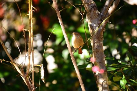 梅の中のジョビちゃん