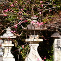 写真: 石灯籠と紅梅