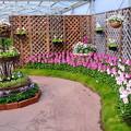 写真: 早春の草花展