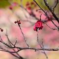 写真: 春色~