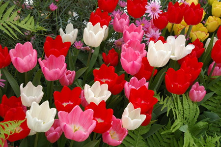 早春の賑わい~~~