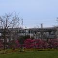 写真: 梅と新幹線