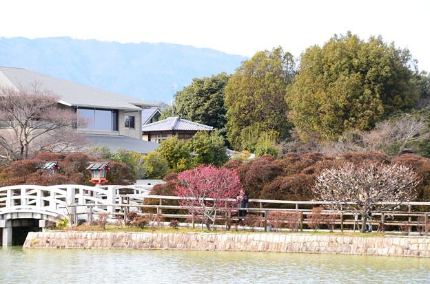 写真: 参道の梅