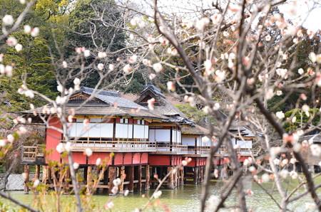 梅の中の錦水亭