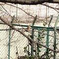 写真: 賀茂川のジョビ子ちゃん