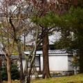 写真: 南禅寺の梅
