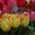 写真: 一面の春~