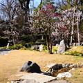 梅咲く庭園