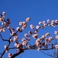 写真: 早春の空を染めて~