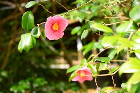 輝国の春(キコクノハル)