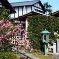 天寧寺の梅風景