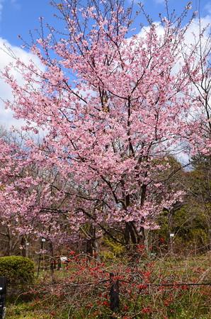 春の風景~