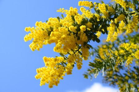 春の空を染めて~